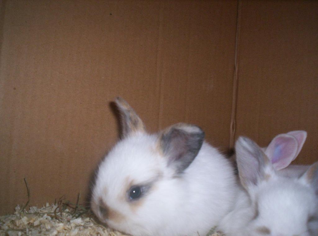 kleinanzeigen hasen kaninchen seite 5. Black Bedroom Furniture Sets. Home Design Ideas
