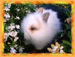 kleinanzeigen hasen kaninchen seite 44. Black Bedroom Furniture Sets. Home Design Ideas