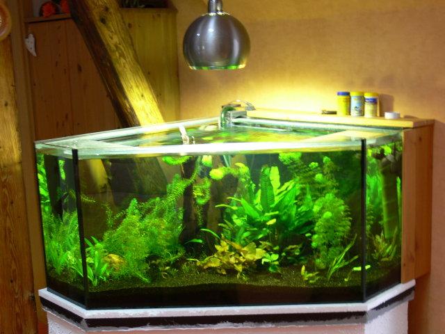 kleinanzeigen aquarien und zubehoer seite