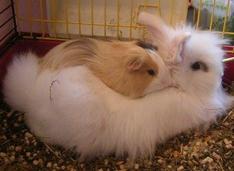kleinanzeigen hasen kaninchen seite 10. Black Bedroom Furniture Sets. Home Design Ideas