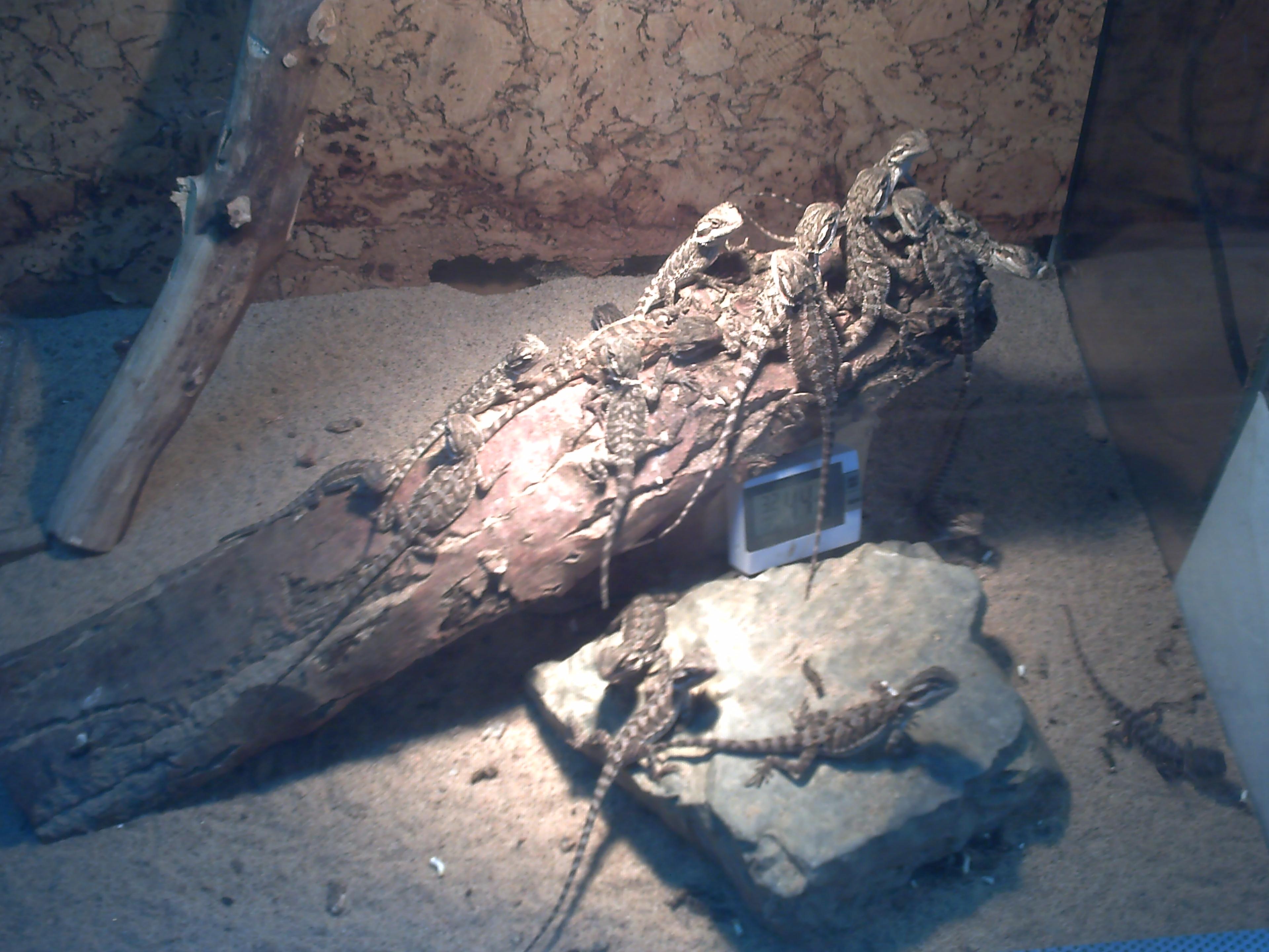 Eiche bad salzungen : Kleinanzeigen reptilien seite 20