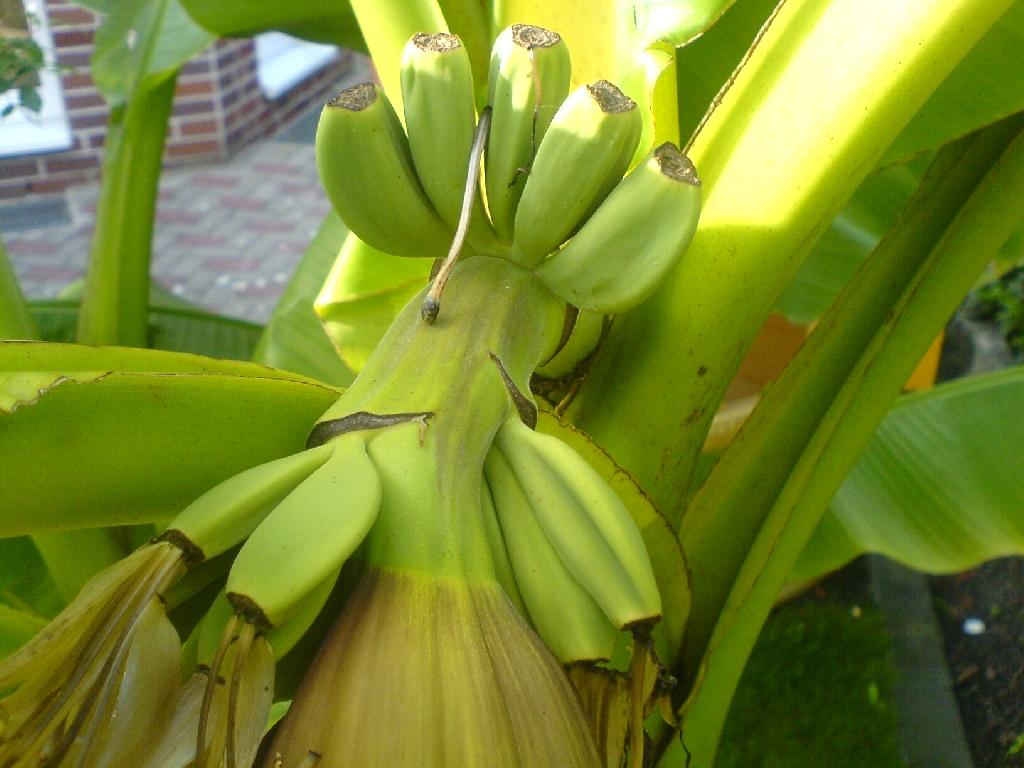 Winterharte pflanzen palmen pflanzen in berlin handwerk for Winterharte pflanzen