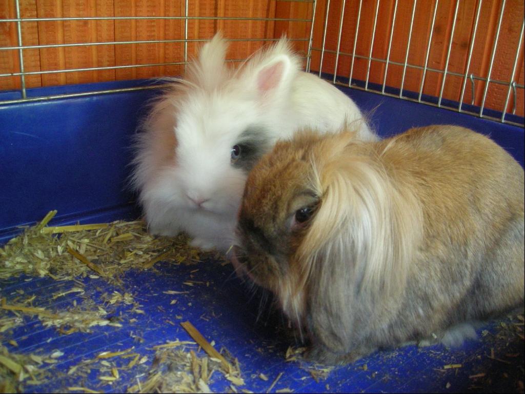 Gartenmobel Outlet Affalterbach : süße kaninchen zu verschenken 2 süße kaninchen suchen ein