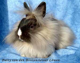 kleinanzeigen hasen kaninchen seite 16. Black Bedroom Furniture Sets. Home Design Ideas