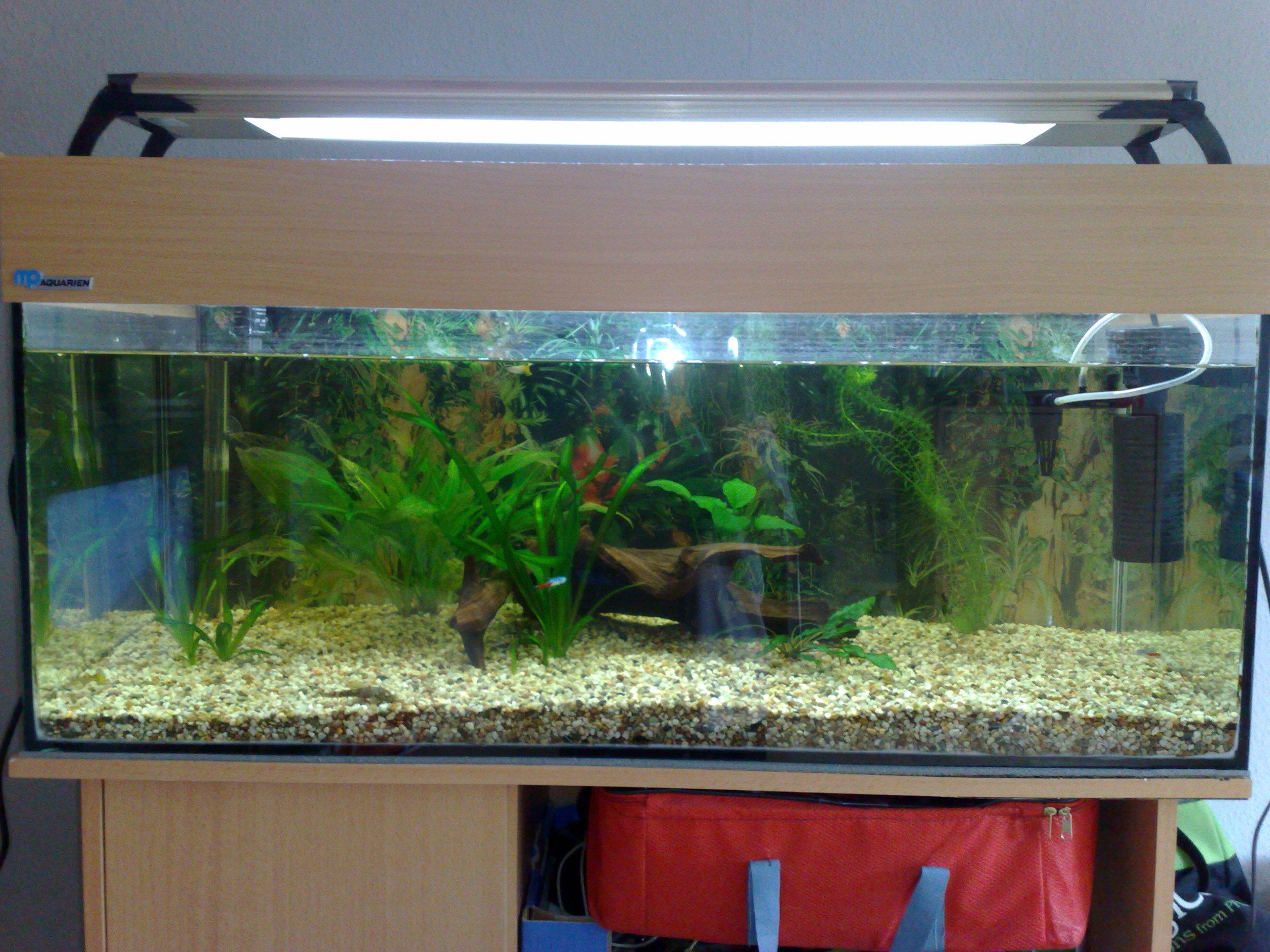 kleinanzeigen aquarien und zubeh r seite 9. Black Bedroom Furniture Sets. Home Design Ideas