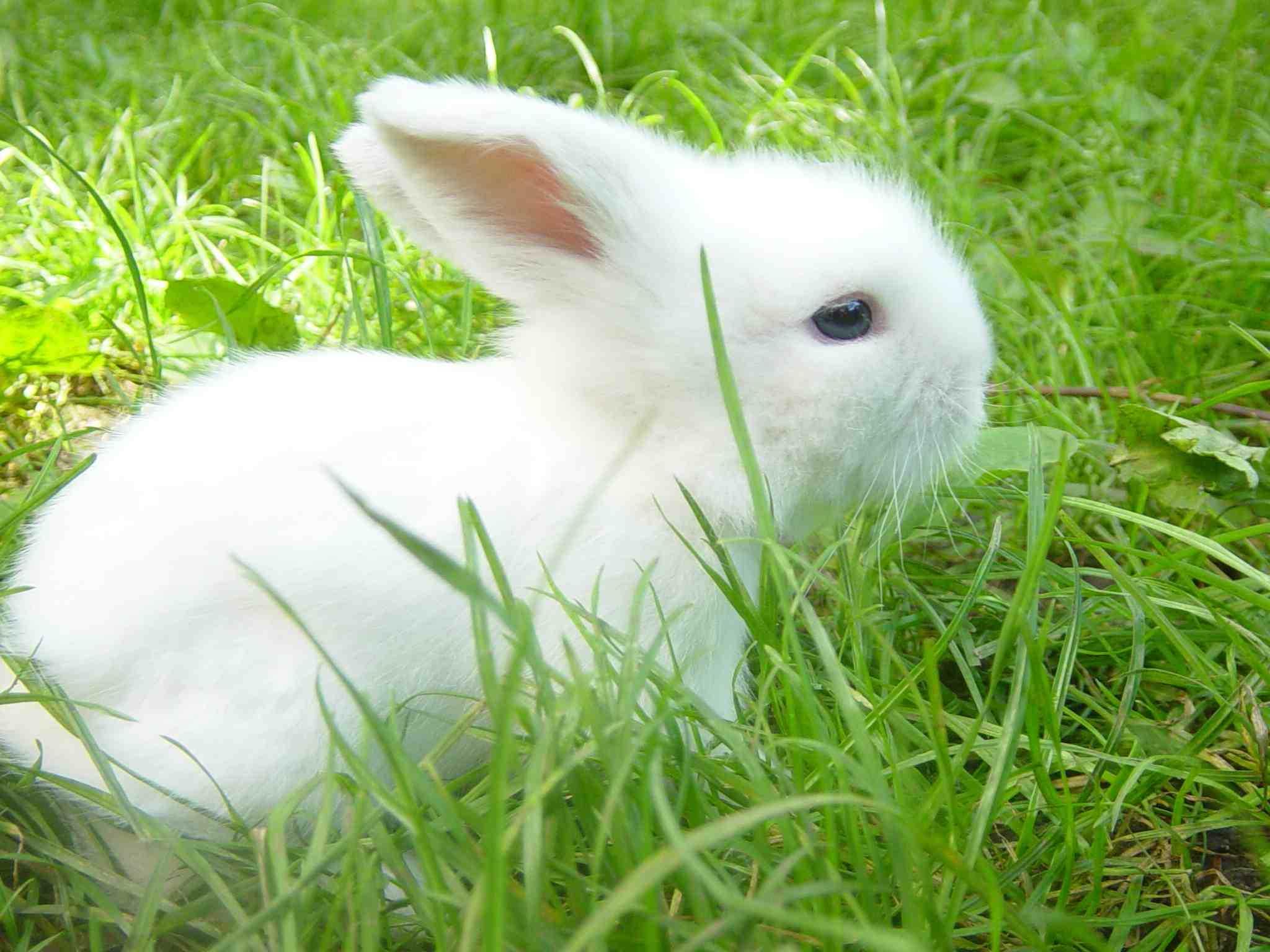 s e teddywidder kaninchen babys zu verkaufen in leipzig tiere kleinanzeigen. Black Bedroom Furniture Sets. Home Design Ideas