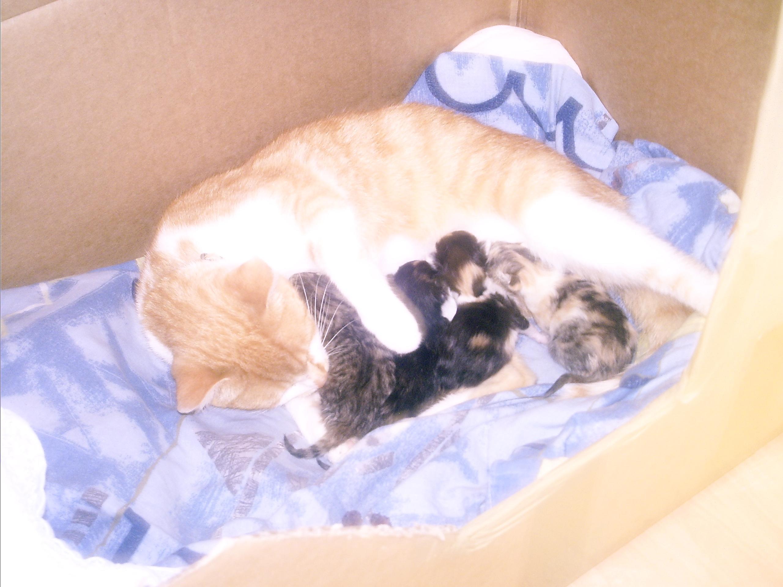 katzenbabys zu verschenken ebay