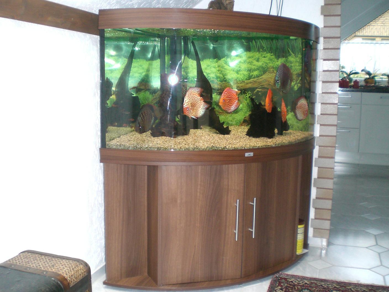 juwel aquarium trigon 350 eck nu braun mit wertvollen diskus fischen in recklinghausen tiere. Black Bedroom Furniture Sets. Home Design Ideas