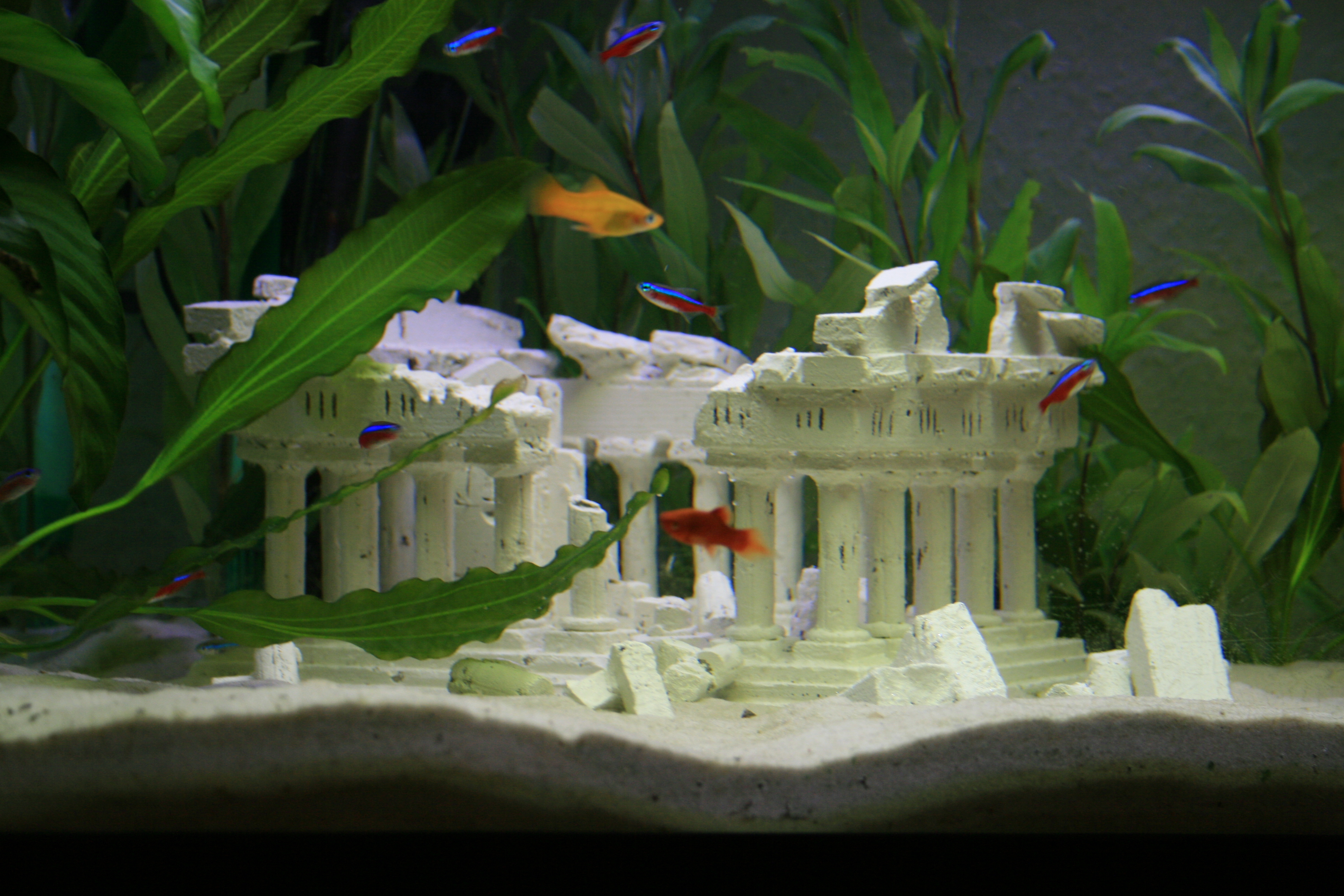 Aquarium Dekoration | Möbelhaus Dekoration