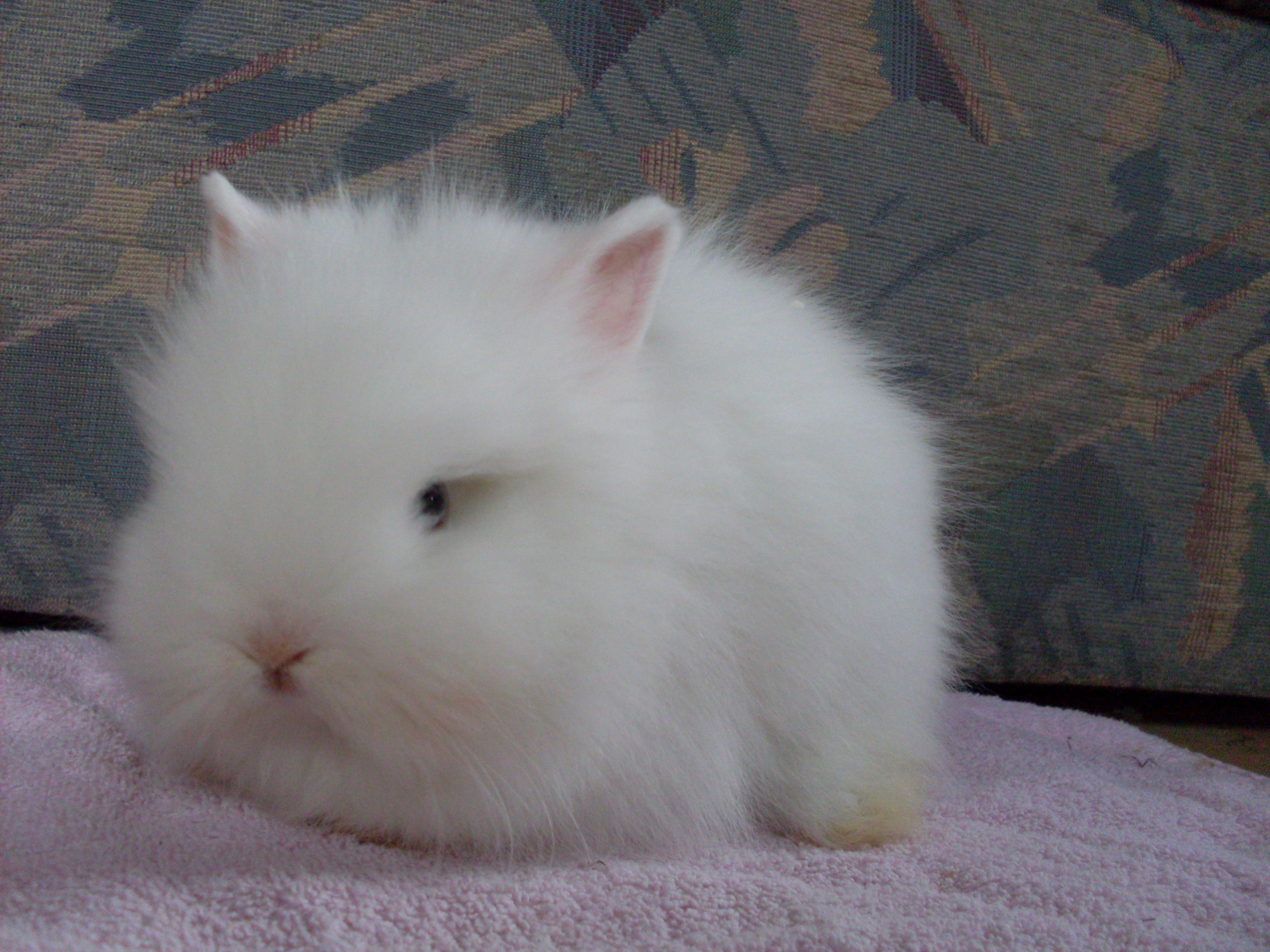 aussergew hnliches kaninchenbaby abzugeben in marsberg. Black Bedroom Furniture Sets. Home Design Ideas