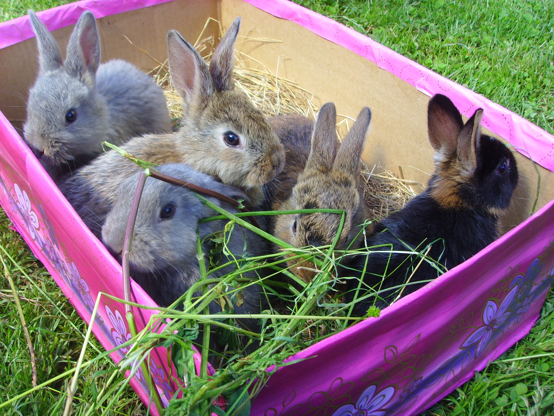 kleine s e kaninchen suchen ab sofort ein liebevolles zu hause in marxzell tiere kleinanzeigen. Black Bedroom Furniture Sets. Home Design Ideas