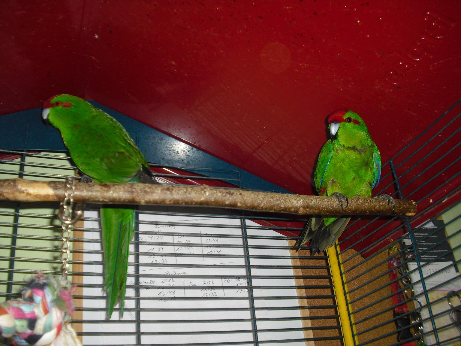 Papageien Auffangstation