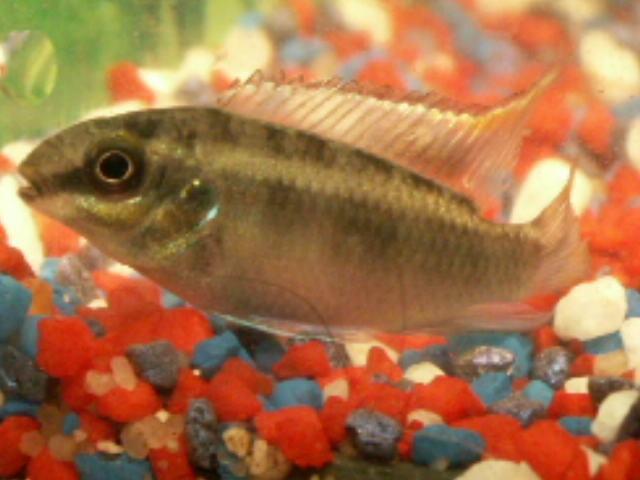 komplettes aquarium schn pchen von juwel 54 dicht in On zierfische günstig