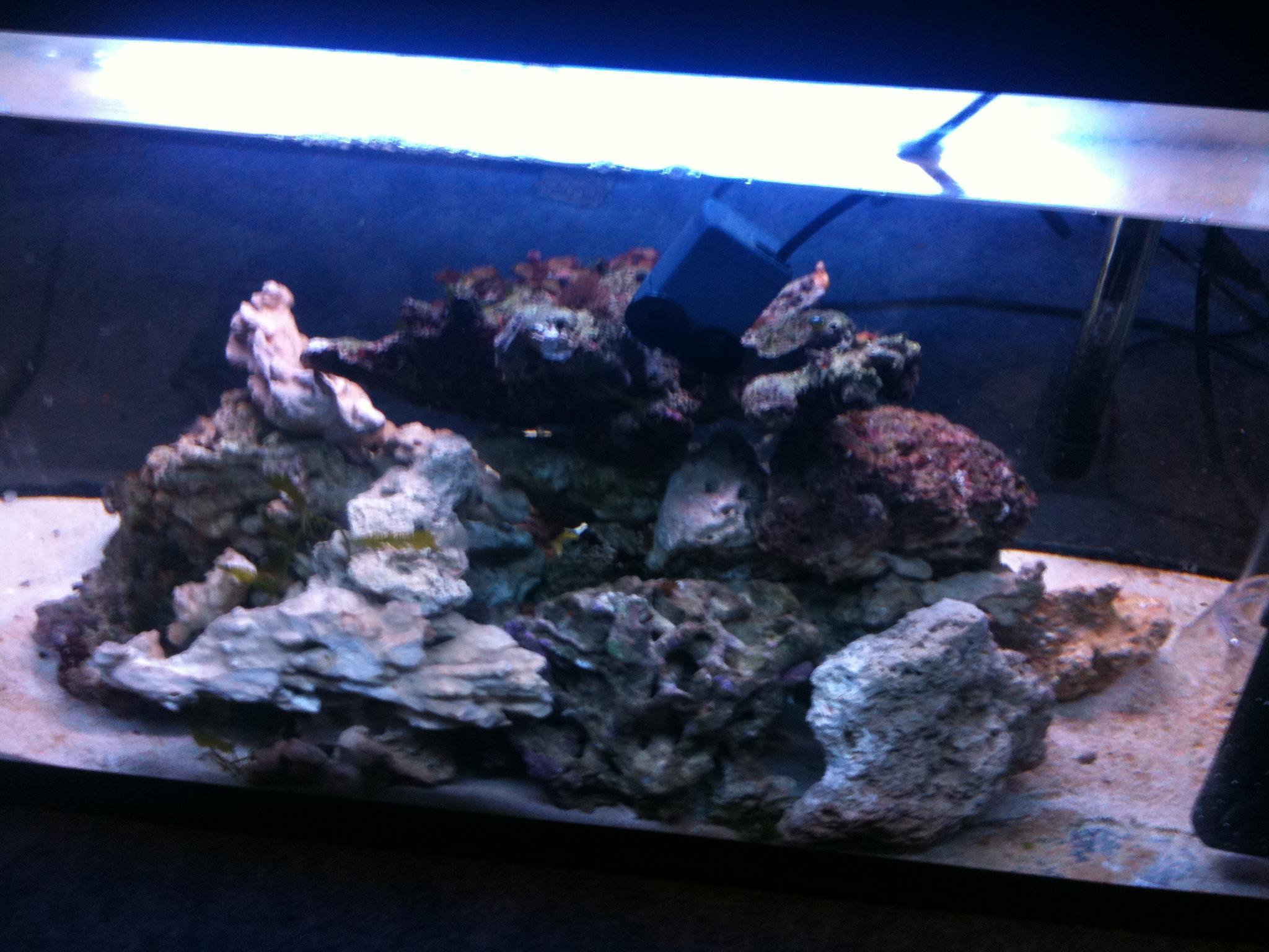 120 liter meerwasseraquarium verkaufe meerwasser aquarium for Aquarium 120x40x50