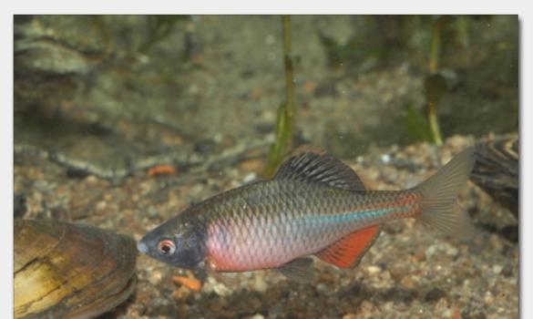 Kleinanzeigen fische seite 2 for Teichfische bestellen