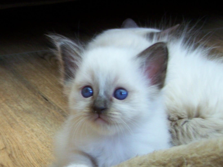 süße kitten