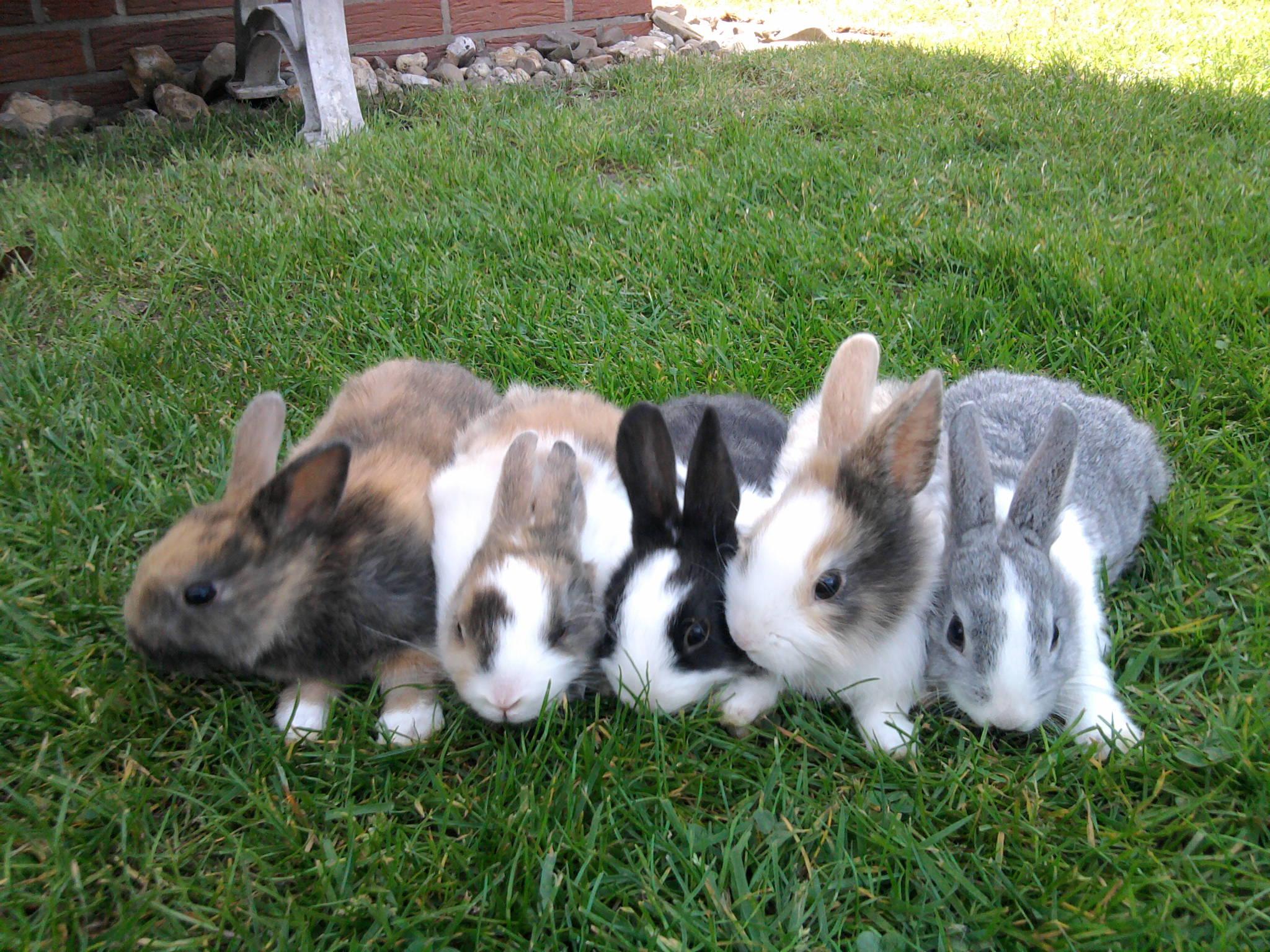 kleine s e baby kaninchen zu verkaufen in nordwalde tiere kleinanzeigen. Black Bedroom Furniture Sets. Home Design Ideas