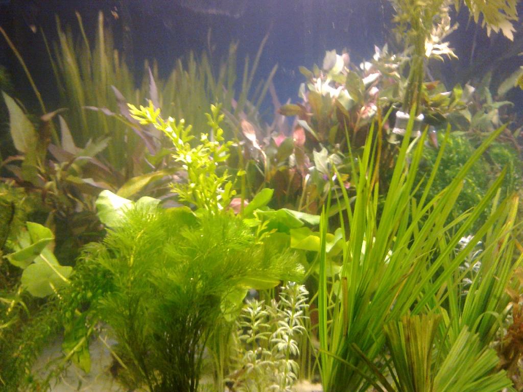 wasserpflanzen komplett set f r 500 liter aquarium top in elstertrebnitz tiere kleinanzeigen. Black Bedroom Furniture Sets. Home Design Ideas
