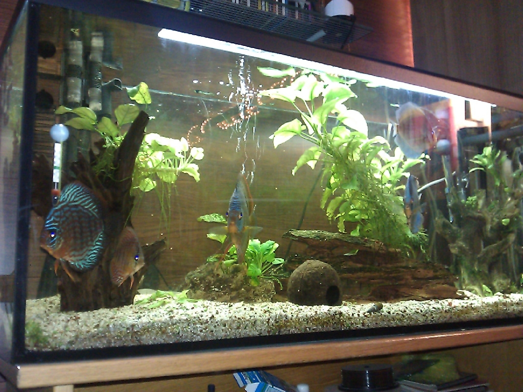 Diskus aquarium mit zubeh r 120x40x50cm in vilseck tiere for Diskus aquarium