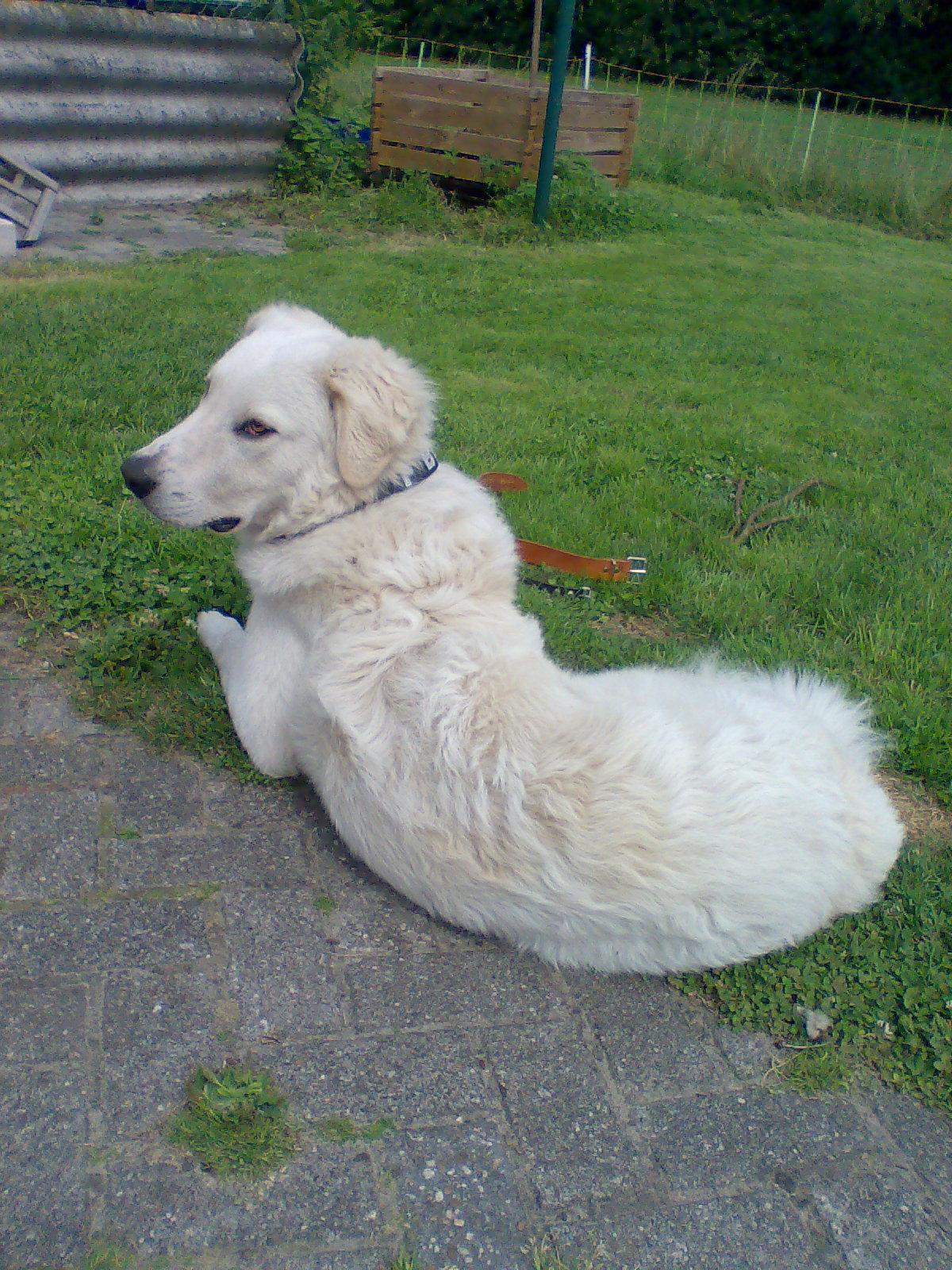 In papenburg zu verschenken hunde Hund Klein