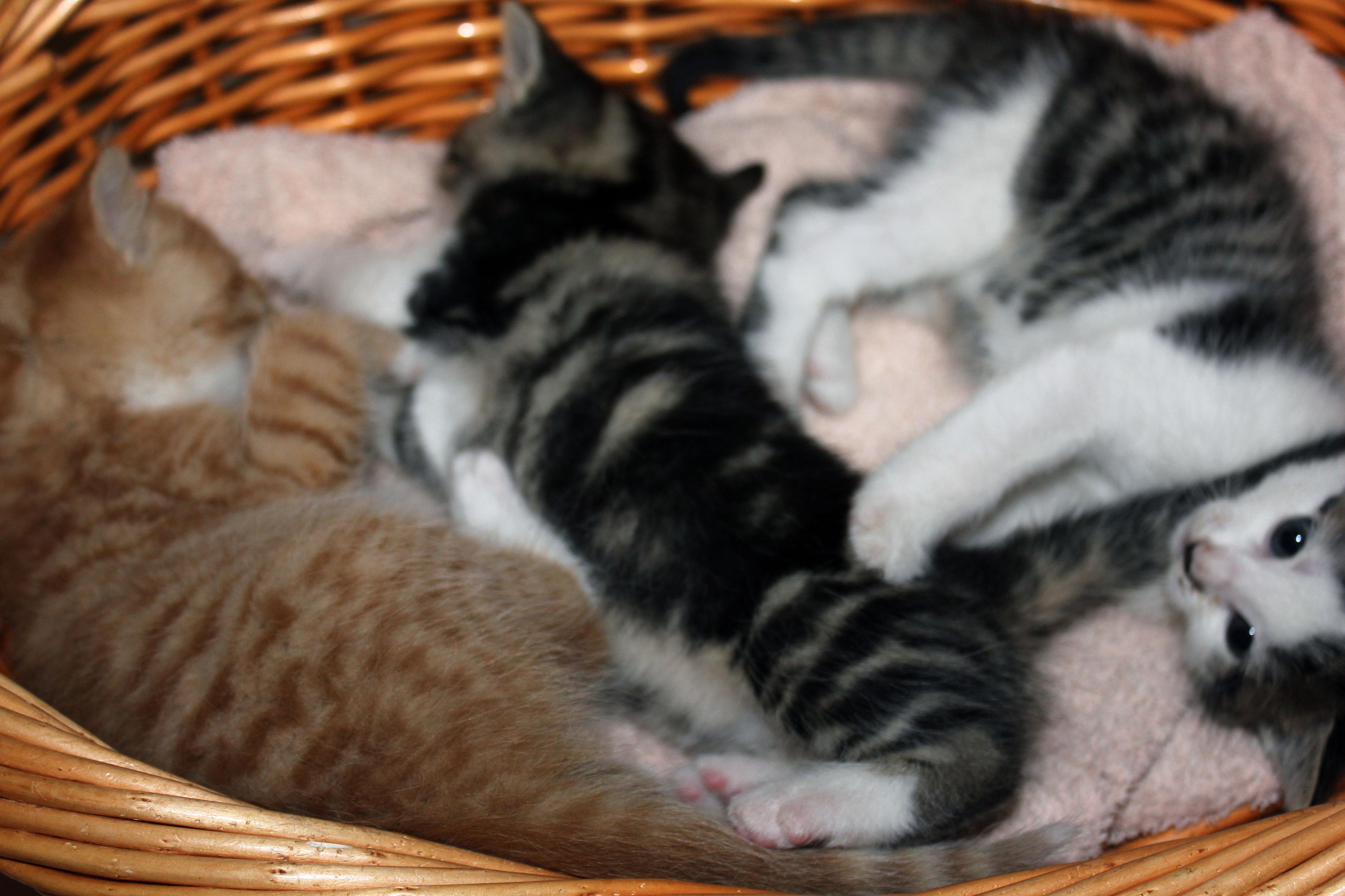 drei katzenbabys zu verschenken in dierdorf tiere kleinanzeigen. Black Bedroom Furniture Sets. Home Design Ideas