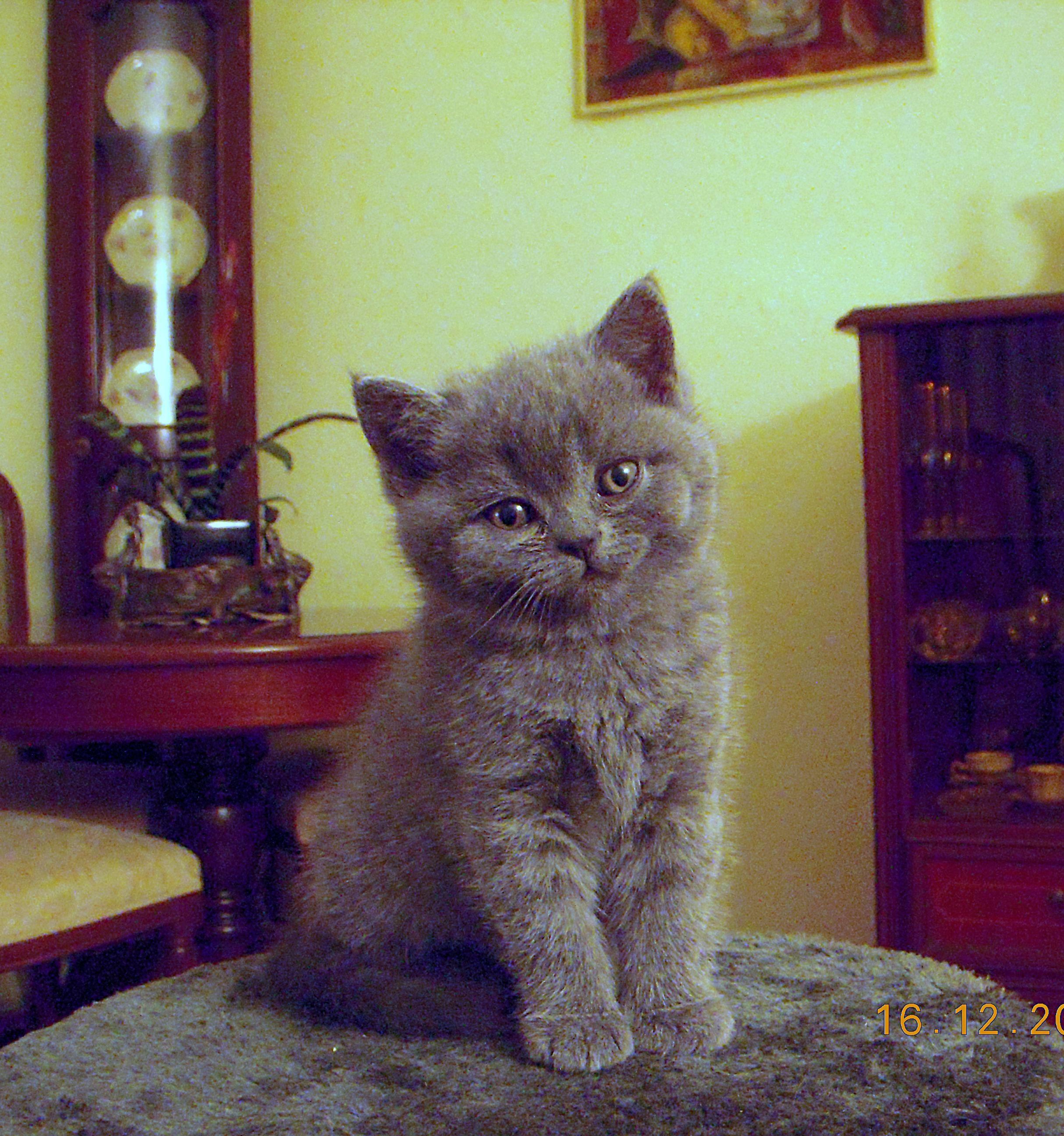 kitten leipzig