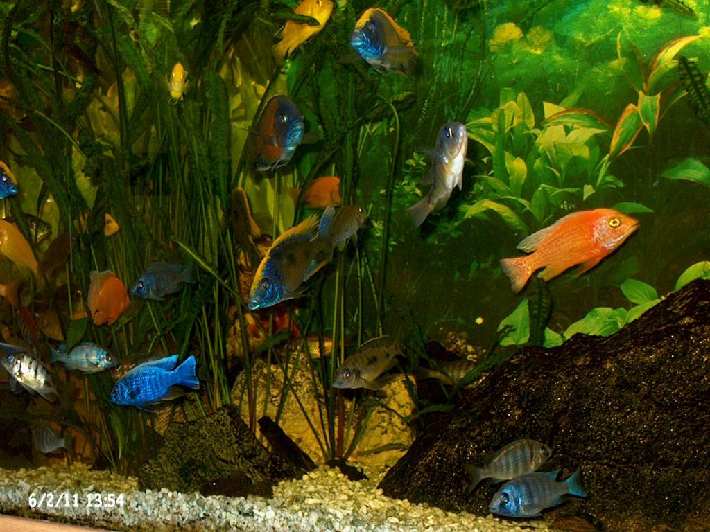 zierfischzuchtanlage aquarien f r zierfische in idstein